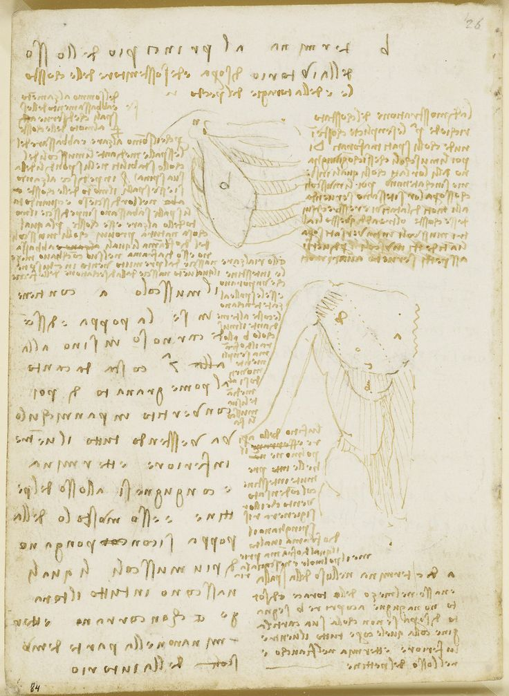 essay on leonardo da vincis inventions 2018-2-22 leonardo da vinci by emelia worcester the one and only leonardo da vinci was one of the greatest masters of the renaissance he was famous for being a painter, sculptor, architect, engineer, musician, inventor, and scientist.