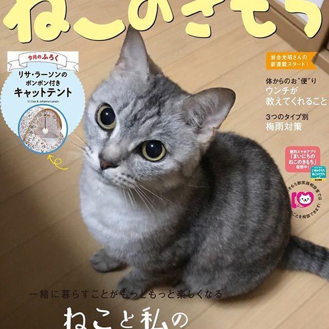 ♡ おめめくりくりの可愛いゴンちゃんで、 ねこのきもちの6月号をカバーしました💘 いつかゴンちゃんも猫の雑誌に載りたいね😼 誰でも表紙になれるこのアプリは嬉しいです🤣 みんなも是非やってみてください👈💕 極楽ねこカレンダー2018に参加中です🍀 よかったら清き1票よろしくお願い致します🙇♀️ #cat#neko#ねこ#猫#ネコ#キャット #日本猫#雑種猫#アメショもどき#愛猫 #ゴンちゃん#さばとら#にゃんこ#美猫 #にゃんだふるらいふ#ピクネコ#ねこ部 #ニャンダフルライフ#ペコねこ部#表紙猫 #ニャンスタグラム#猫スタグラム #ねこのきもちアプリ#ねこのきもち #極楽ねこカレンダー#ウェブキャットショー2