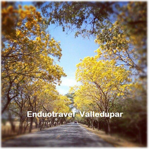 Un sendero q lo espera al lado y lado de cañaguates florecidos