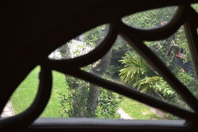 Looking into the garden through the fan window in the Sweet Olive room