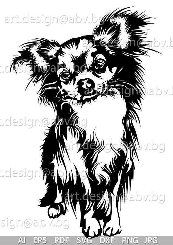 Chihuahua Chihuahua Art Chihuahua Drawing Dog Drawing