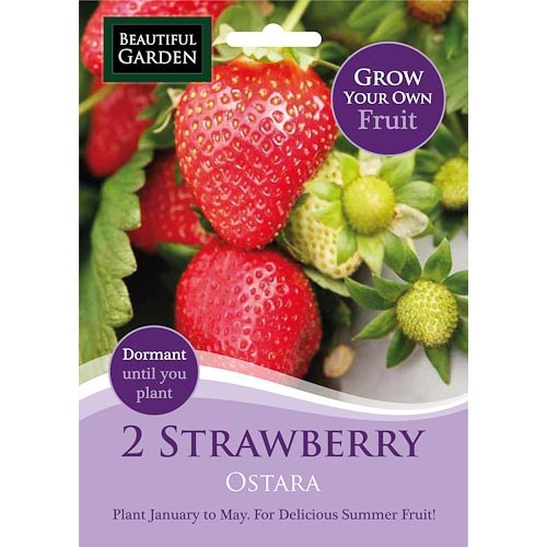 2 Strawberry - Ostara | Poundland