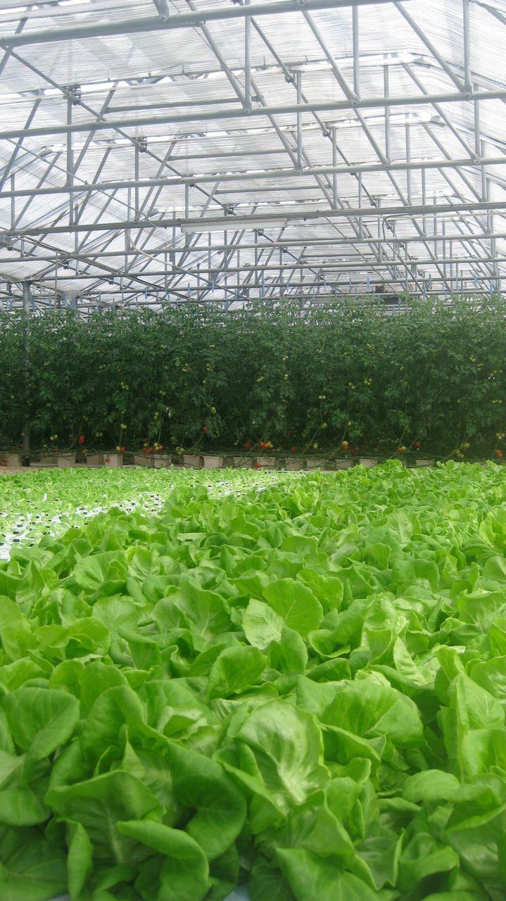 #hydroponic farm