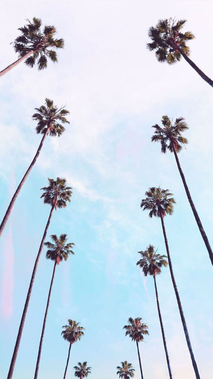 Reminds Me Of Being A Kid When I Played Outside All Day Until It Got So Dark Yo Free Download Palm Trees Wallpaper Tree Wallpaper Aesthetic Wallpapers