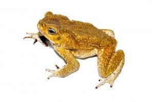 L'espèce humaine est-elle une grenouille dans une casserole ?