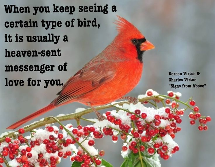 Red Cardinal Bird Quotes