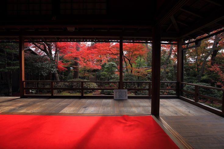 高画質 大法院 紅葉 写真 秋 京都