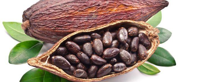 CACAO: EL CORAZON DEL CHOCOLATE