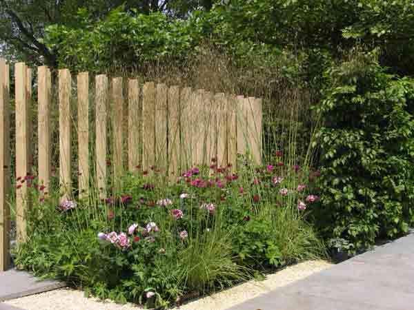 Rabatt: Cerise rosor, mörkröd knautia, höga gräs