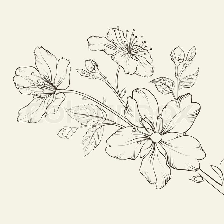 Blossom Flower Line Drawing : Cherry flower drawing google haku l tattoo ideas