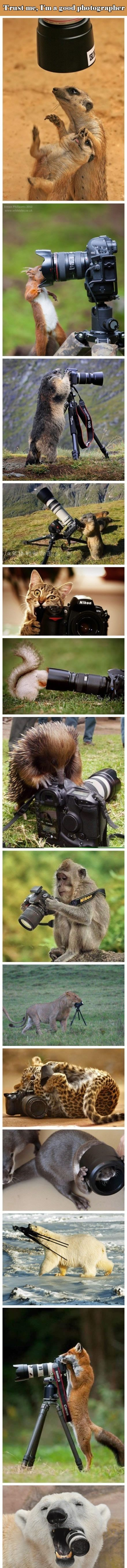 Animals and cameras.     Awe! The monkey with the Nikon is so cute OMG!! Haha! Awe!