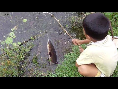 Amazing Boy Fishing | Free line Fishing By Smart Boy in Siem Reap - Fishing techniques - (More info on: https://1-W-W.COM/fishing/amazing-boy-fishing-free-line-fishing-by-smart-boy-in-siem-reap-fishing-techniques/)