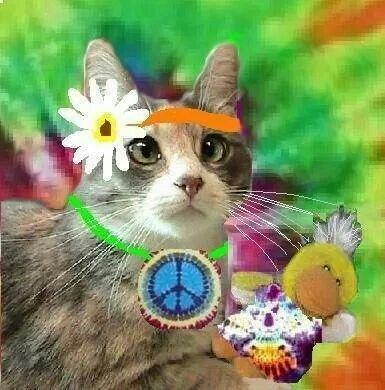Ashley Cat Eyes Gypsy