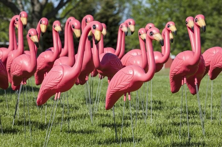 """the plastic pink flamingo a natural history essay When you first read the title """"the plastic pink flamingo: a natural history"""", you think you are going to learn the story of flamingos jennifer price uses."""