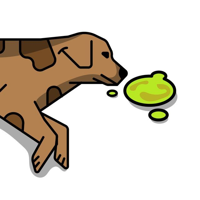Why Does My Dog Keep Throwing Up Yellow Bile?