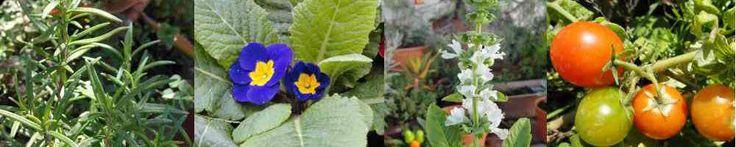 Aromáticas repelentes – Cómo usarlas – | El Jardin en Casa