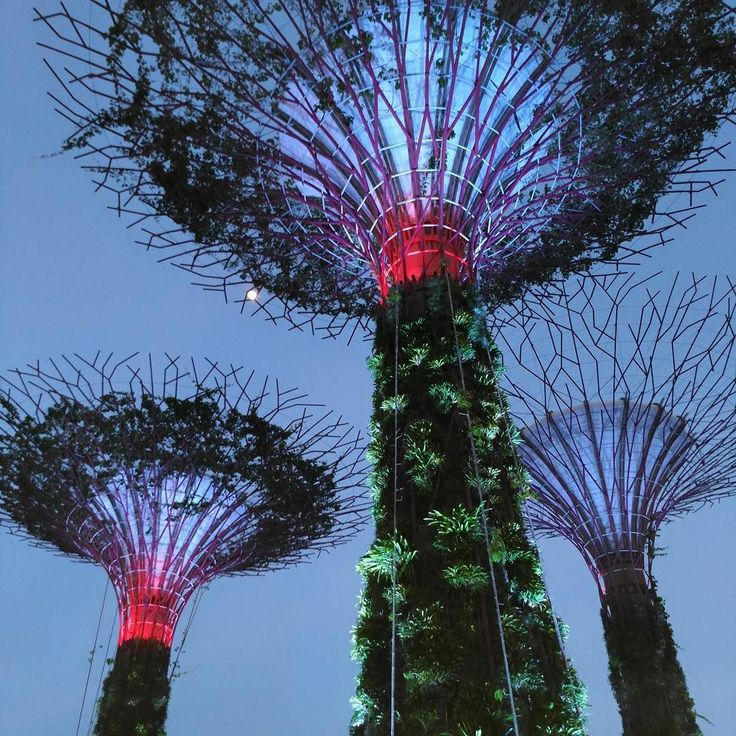 The Super Trees at Gardens By The Bay all lighted up. We were out testing the Asus Zenfone's day and night capabilities and are we impressed.  #sgcarshoots #sgexotics #speed#sgcaraddicts #singapore #sgcars #sportscars #revvmotoring #nurburgring #asussg #carinstagram #hypercars #redbullsg #excitement #epic #visit_singapore #carswithoutlimits #fastcars #drifting #motorsports #love #gopro  #instagrammers #supercarlifestyle #gardensbythebay