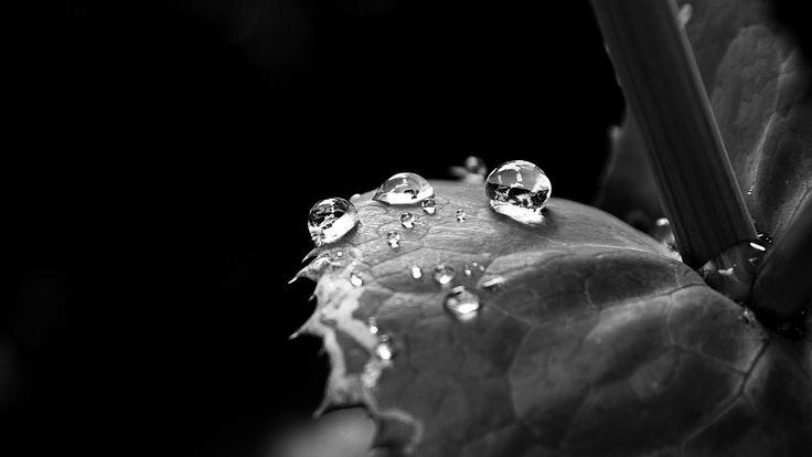 leaf_drop_dew_black_and_white_65805_3840x2160.jpg (3840×2160)