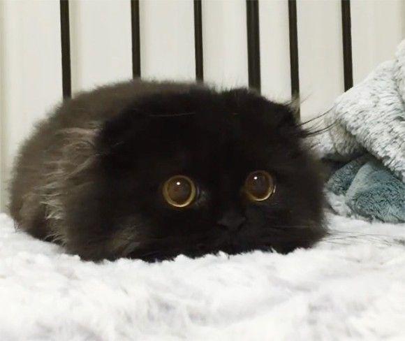 A Black Cat.  >◉•◉< meow♡