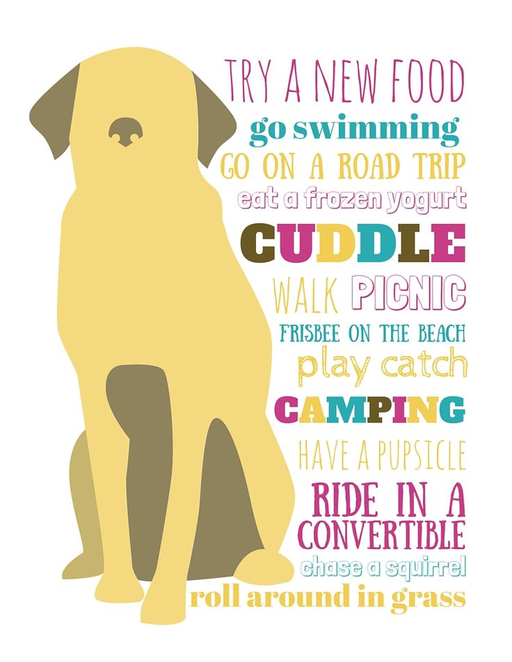 dog bucket list for summer