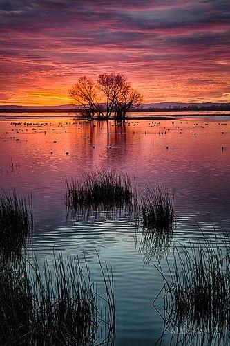 Incredible sunset--Merced National Wildlife Refuge, California