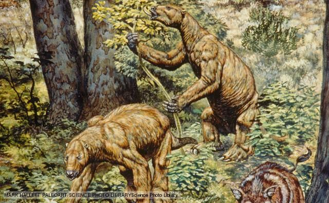 giant ground sloth interesting facts