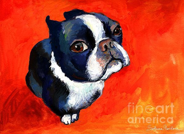 funny boston terriers | Funny Boston Terrier dog portrait painting by Svetlana Novikova, www ...