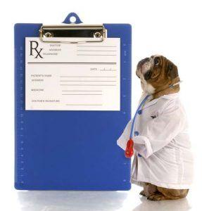 Ingredients in prescription dog food brands