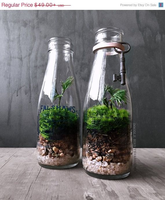 Sale Milk Bottle Terrarium Live Plants Vintage By