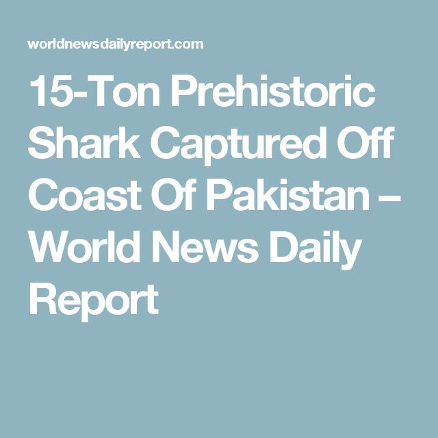 15-Ton Prehistoric Shark Captured Off Coast Of Pakistan – World News Daily Report