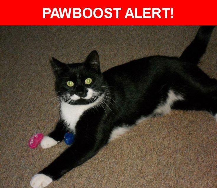 Please spread the word! Max was last seen in Cato, NY 13033.    Nearest Address: Near E Mechanic St & Mechanic St
