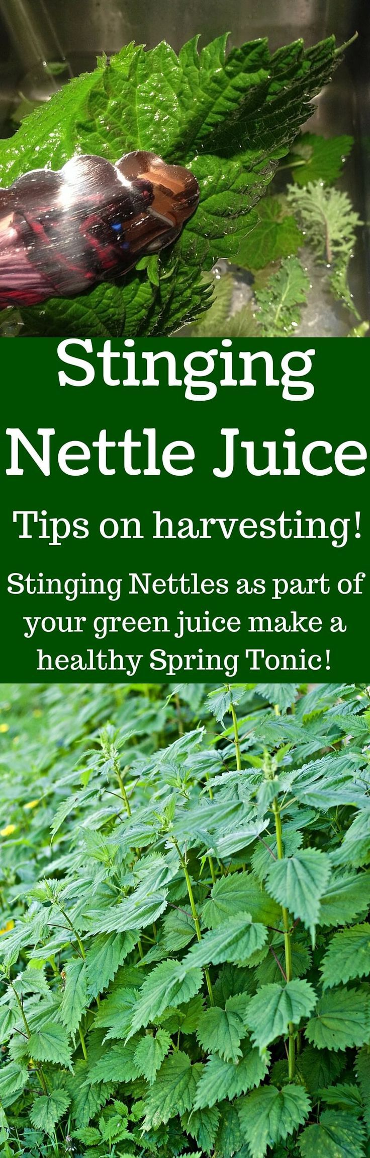 Stinging Nettle Juice Very Healthy spring green. Put it in your juice. We show you how! http://Homemadefoodjunkie.com