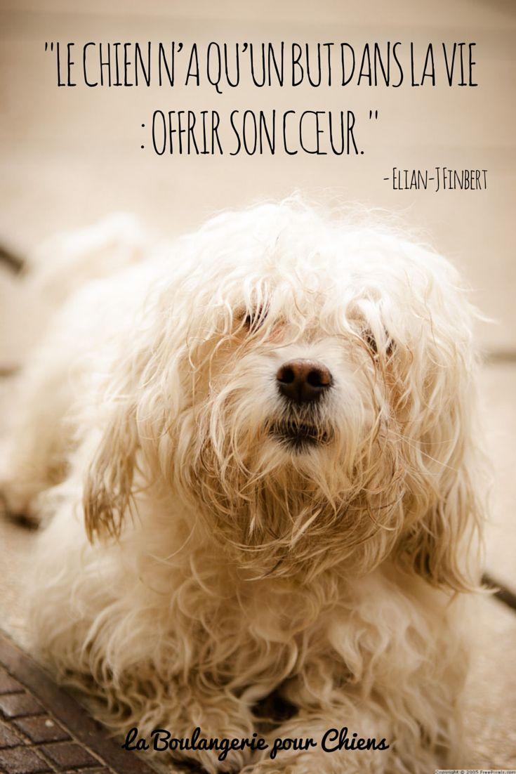Le chien n'a qu'un but dans la vie : offrir son coeur. Citation chien, La Boulangerie pour Chiens.