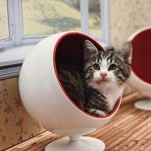 """Quer aliviar o estresse? Conheça o """"BBB"""" só com filhotinhos de gato"""