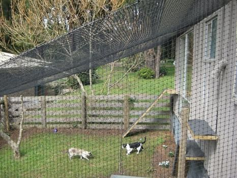 amazing outdoor cat enclosures - Google Search
