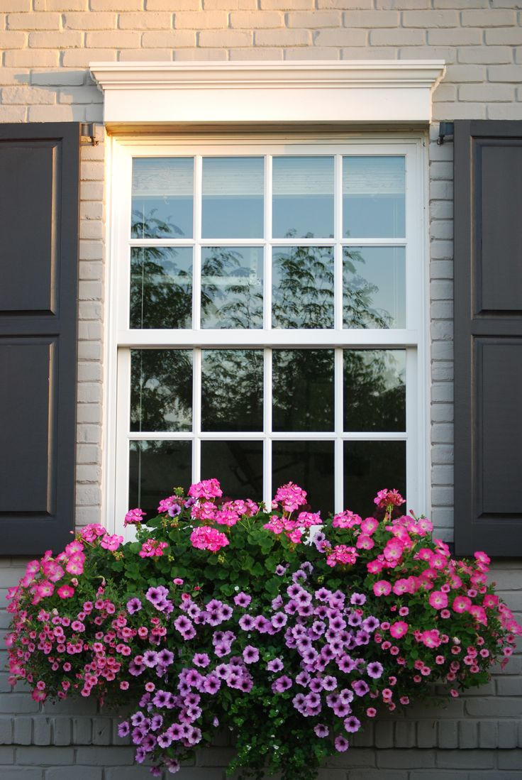 I like the different sizes of pink flowers all bunches around the lavender, very striking window box!
