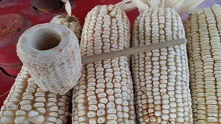 Best 25+ Corn cob pipe ideas on Pinterest | Corn pipe ...