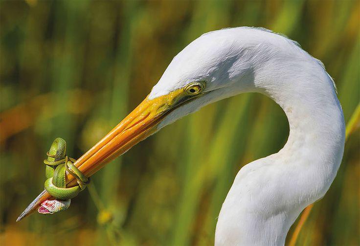 Tajemnicza sowa, gibki flaming i spółka - Inspirowani Naturą | British Trust for Ornithology awards