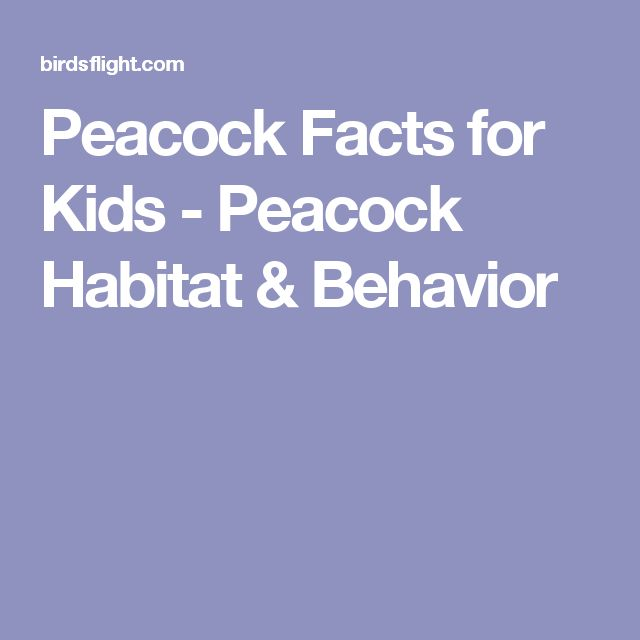 Peacock Facts for Kids - Peacock Habitat & Behavior