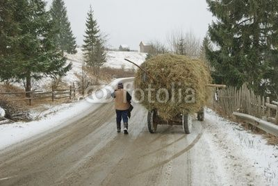 Bucovina, Romania, traditional hay transportation on a snow covered way