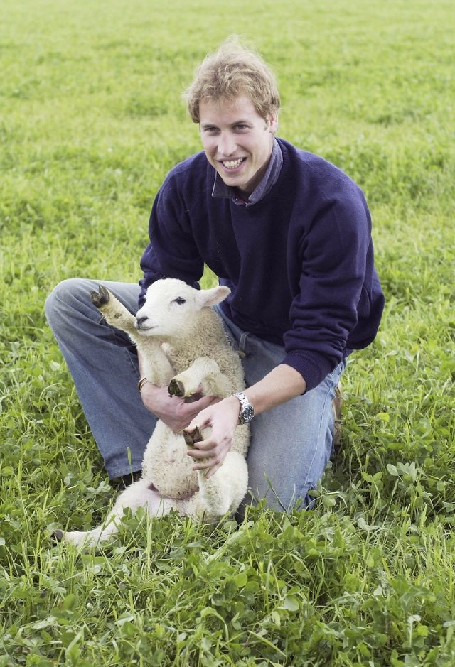 Prince William - with a sheep!!!