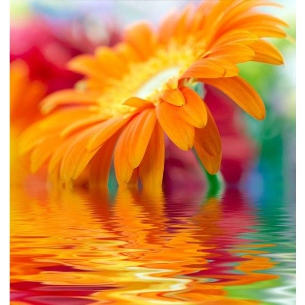 Hd flowers photo 04 hd picture Free stock photos in Image format: jpg,... ❤ liked on Polyvore featuring backgrounds, orange and pictures