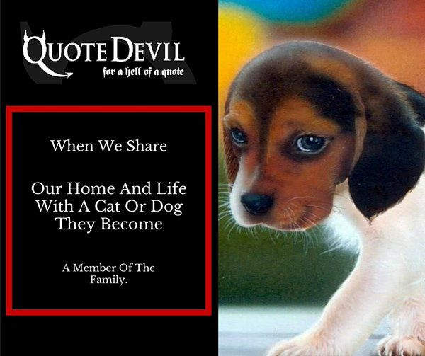 We Are Also Very Competitive So We Offer Great Value Cheap Pet Insurance Online. #AD http://www.quotedevil.ie/pet.php