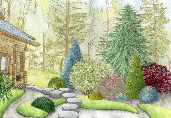 схема хвойной композиции ландшафтный дизайн участка