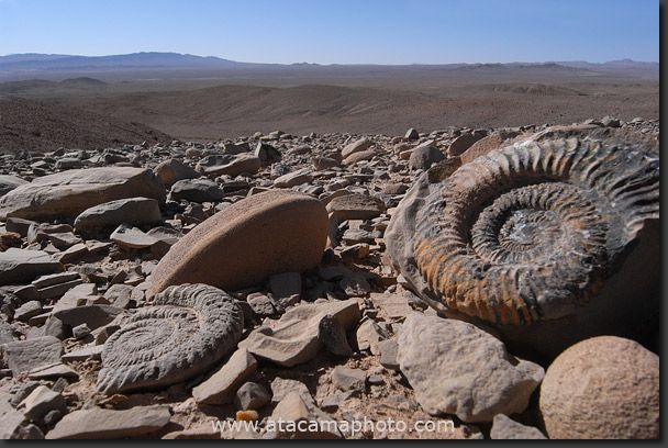 Ammonites and other marine fossils show, that what is now the driest desert was once an ocean