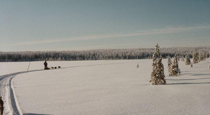 hirvipirtit lapland cabins, Taivalkoski Finland, huskysafari - alone in space