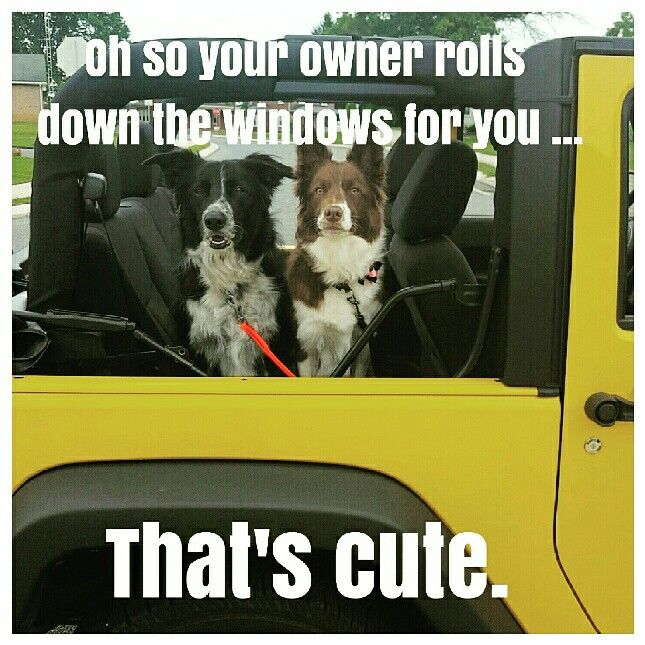 Oh so your owner rolls down the windows for you....thats cute. Jeep dogs