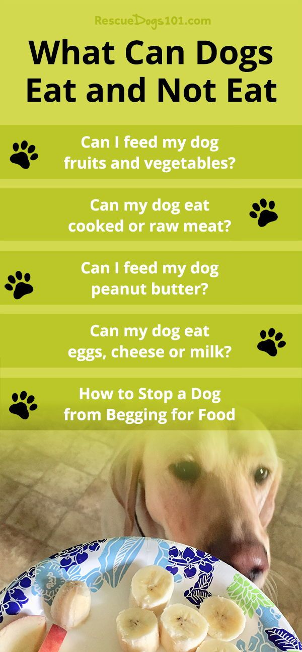 What Can Dogs Eat And Not Eat With Images Can Dogs Eat Dog Eating Peanut Butter For Dogs