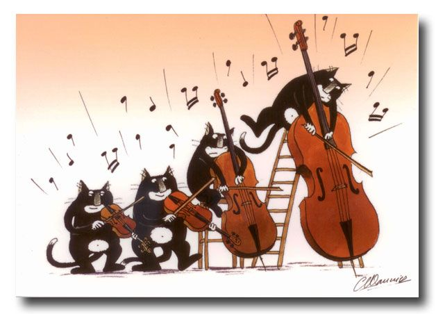 182 best images about Bass on Pinterest | Music humor, Orchestra ...
