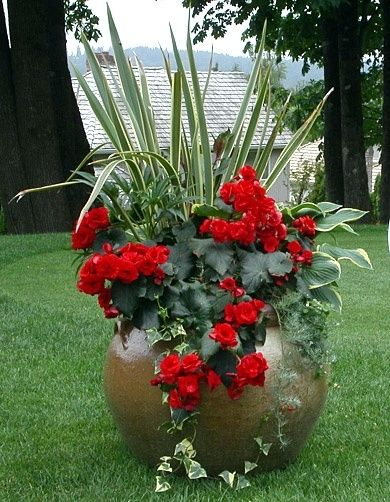 container planting ~ Great color, and variety and size of leaves.
